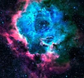 Zz  zz - Rosette stars MANDATA COLLECT.